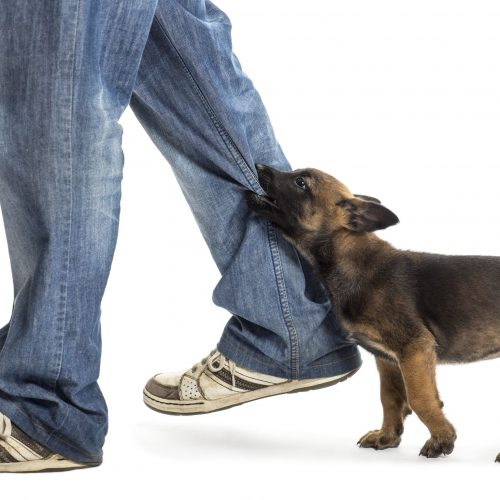 Starting A Dog Attack Case With A Personal Injury Attorney In Royal Palm Beach, FL